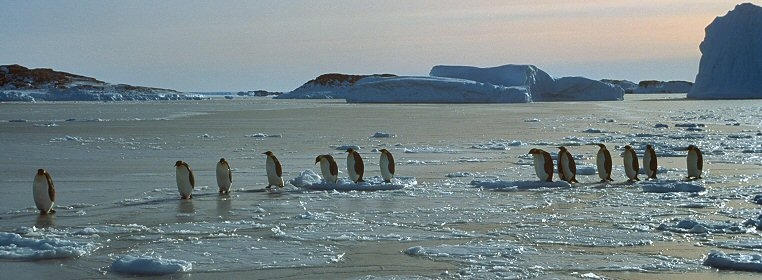 Emperor Penguins in Antartica living the good life!